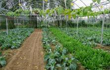 普通肥料吸收率低增长效果差
