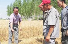 农化服务跟不上缺少专业指导